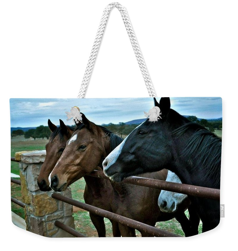 Three Horses Weekender Tote Bag featuring the photograph Three Horses Waiting For Carrots by Kristina Deane