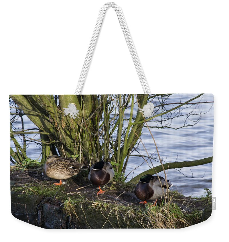 Duck Weekender Tote Bag featuring the photograph Three In A Row by Spikey Mouse Photography