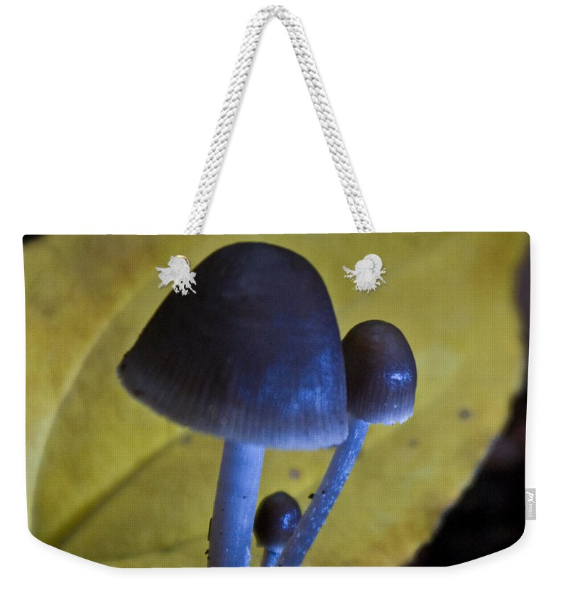 Mushrooms Weekender Tote Bag featuring the photograph Three Little Mushrooms by Douglas Barnett