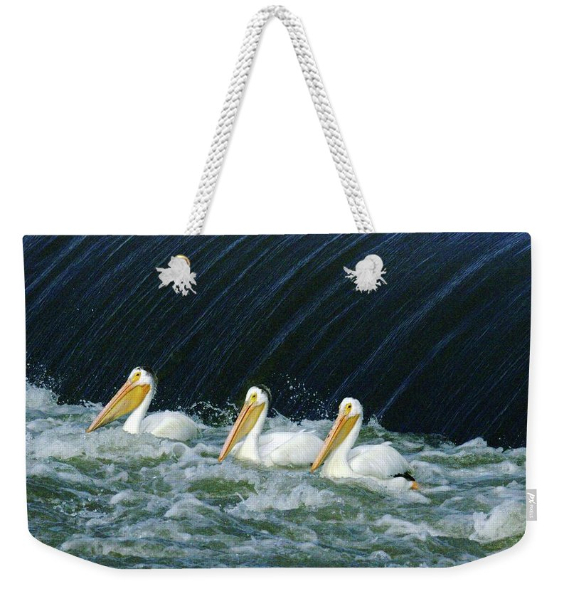 Pelicans Weekender Tote Bag featuring the photograph Three Pelicans Hanging Out by Jeff Swan