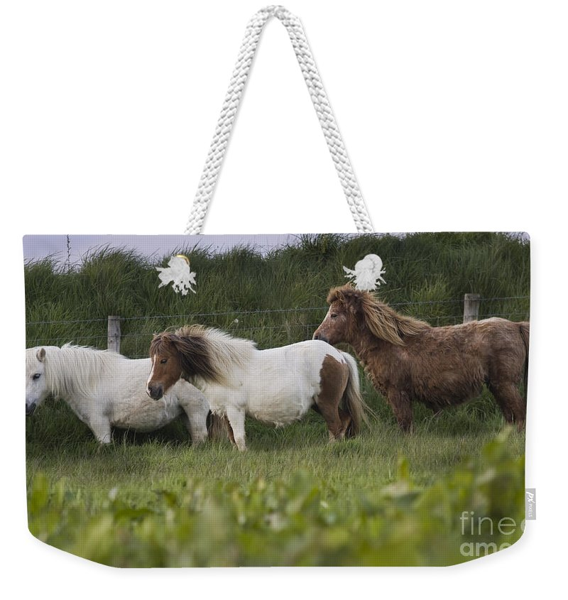Shetland Weekender Tote Bag featuring the photograph Three Ponies by Angel Tarantella
