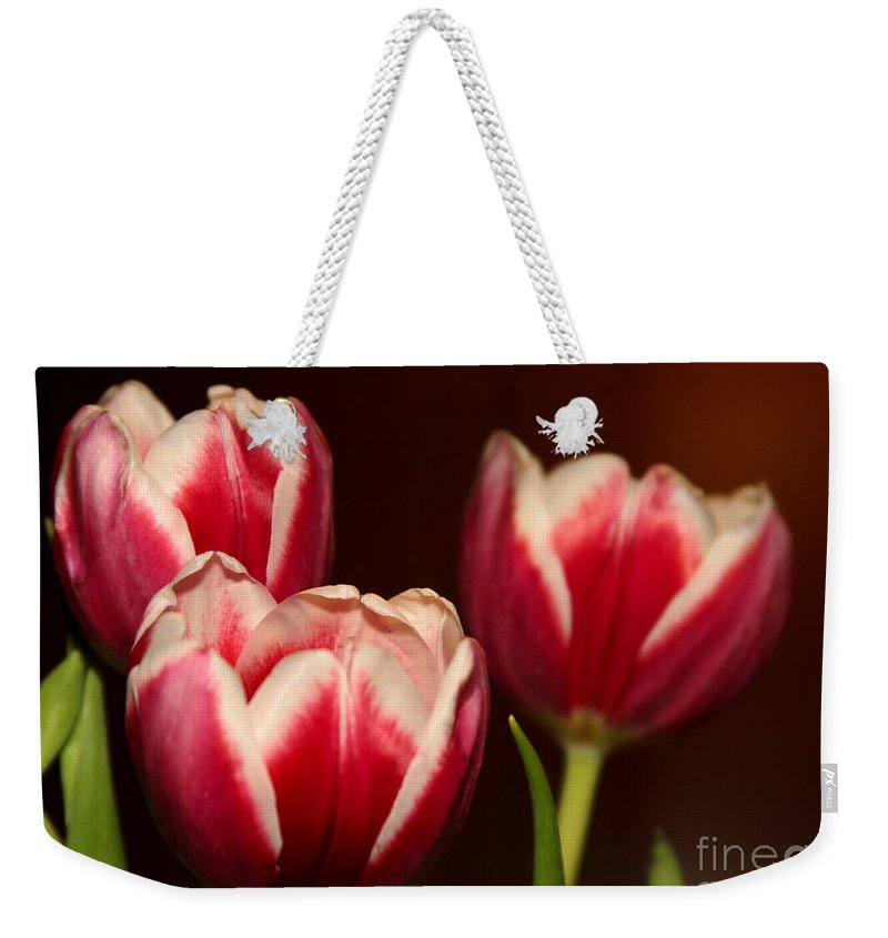 Amazing Weekender Tote Bag featuring the photograph Three Red Tulips by Sabrina L Ryan
