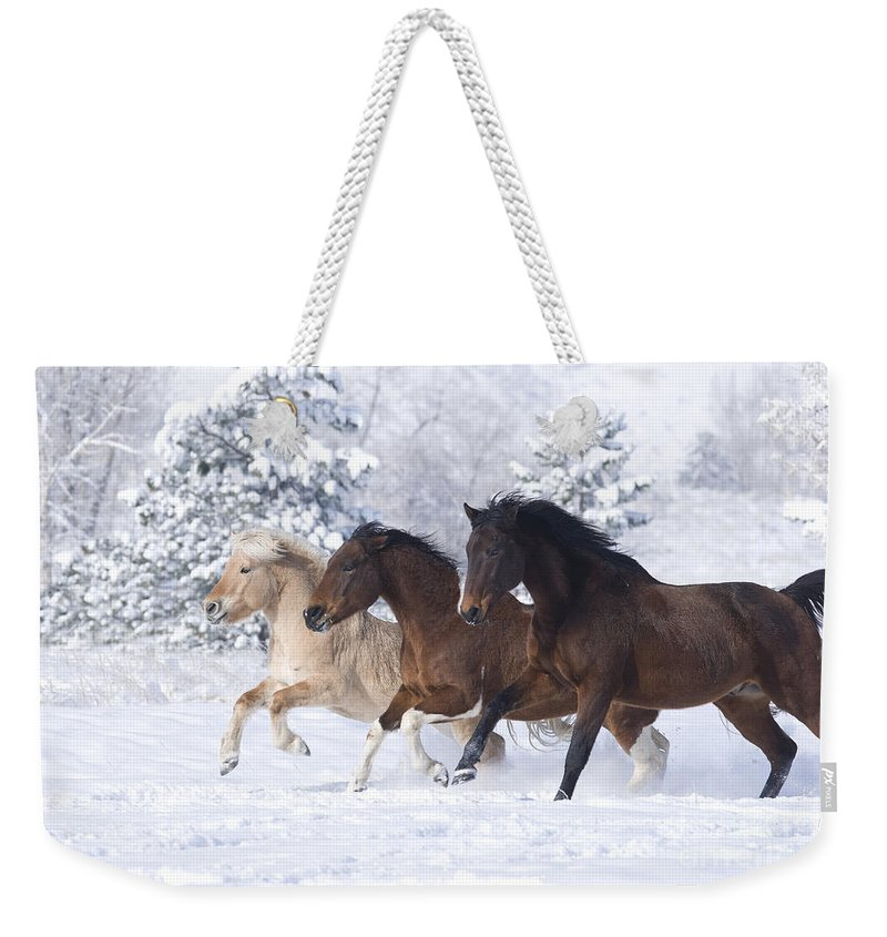 Horse Weekender Tote Bag featuring the photograph Three Snow Horses by Carol Walker
