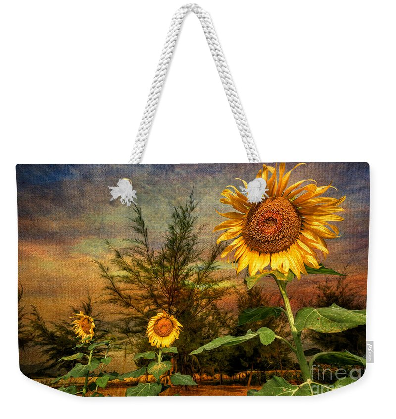 Sunflower Weekender Tote Bag featuring the photograph Three Sunflowers by Adrian Evans