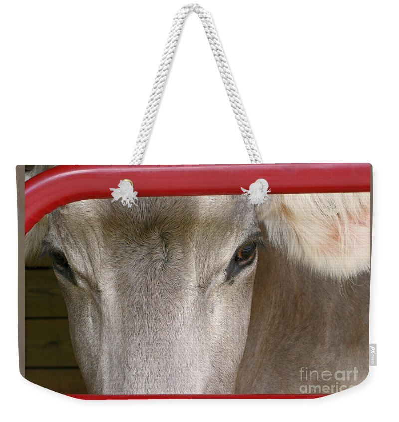 Cow Weekender Tote Bag featuring the photograph Through The Gate by Ann Horn
