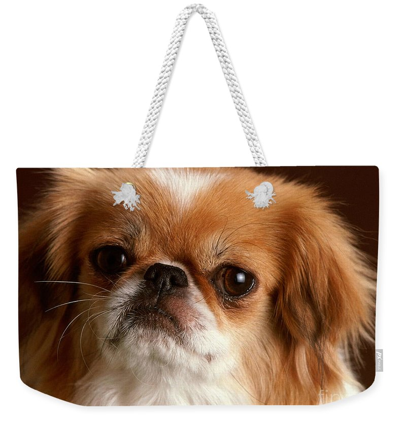 Dog Paintings Weekender Tote Bag featuring the mixed media Tibetian Spaniel by Marvin Blaine