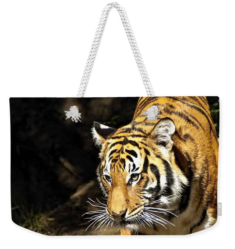 Tiger Weekender Tote Bag featuring the photograph Tiger by Jon Berghoff