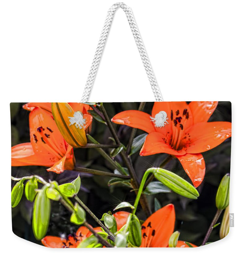 Tiger Lily Weekender Tote Bag featuring the photograph Tiger Lily After The Rain by Cathy Anderson