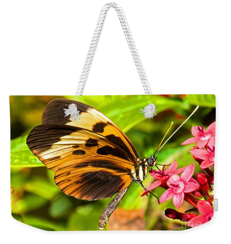 Orange And Black Butterfly Weekender Tote Bag featuring the photograph Tiger Mimic Butterfly by Millard H. Sharp
