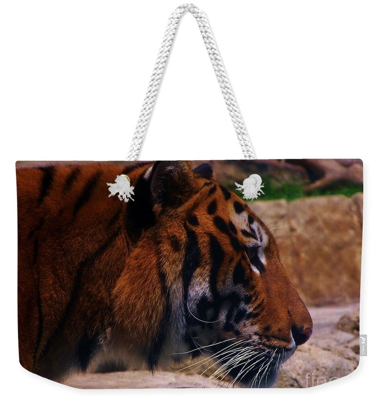 Nature Weekender Tote Bag featuring the photograph Tiger by Paul Smith