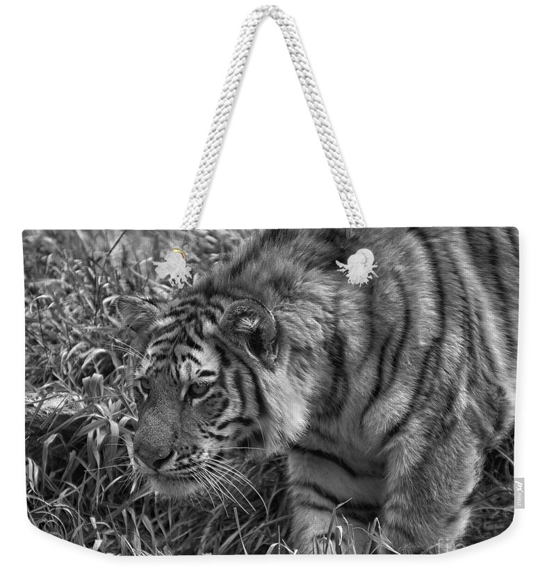 Animals Weekender Tote Bag featuring the photograph Tiger Stalking In Black And White by Thomas Woolworth
