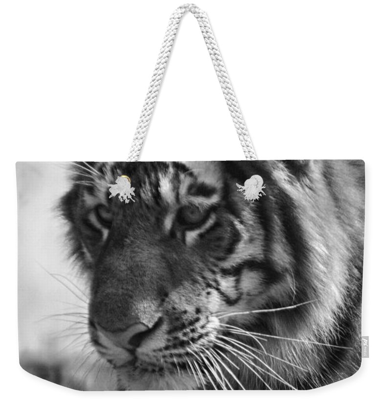 Animals Weekender Tote Bag featuring the photograph Tiger Stare In Black And White by Thomas Woolworth