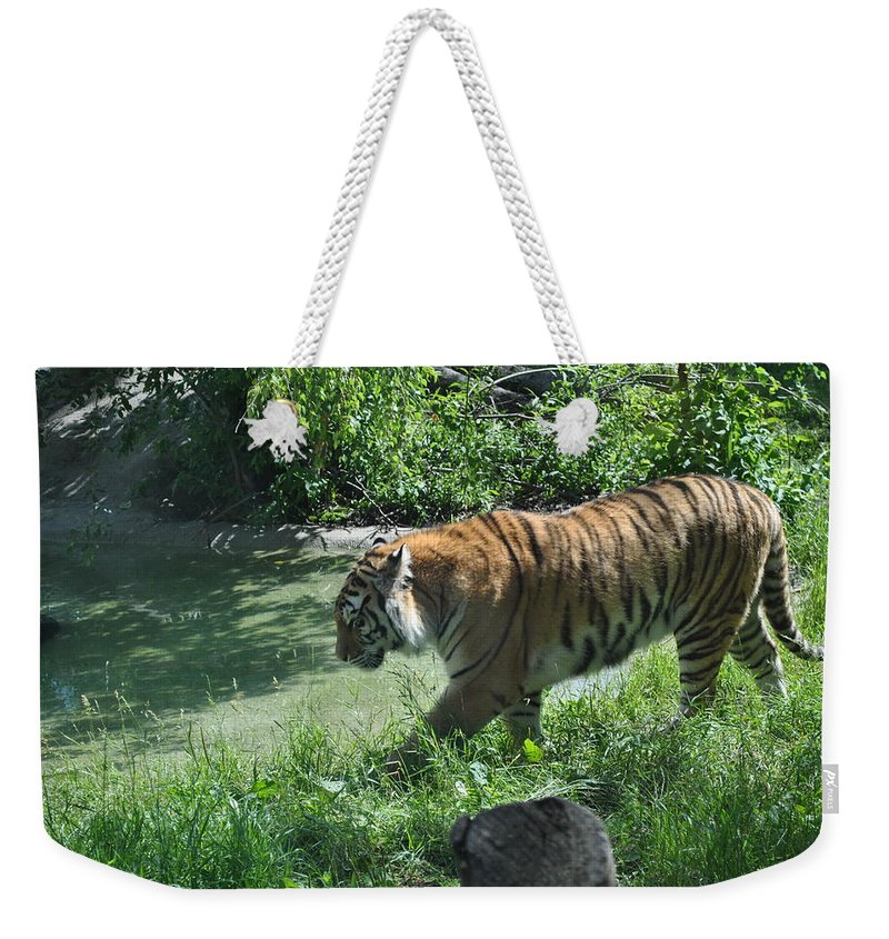 Weekender Tote Bag featuring the photograph Tiger Stroll by Jim Hogg