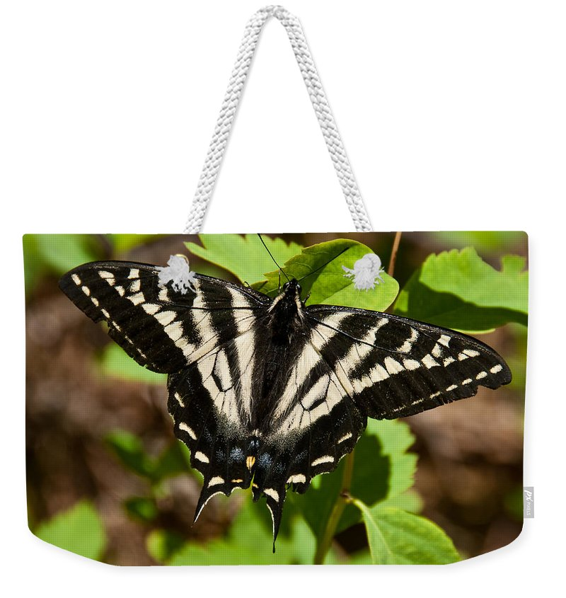 Animal Weekender Tote Bag featuring the photograph Tiger Swallowtail Butterfly by Jeff Goulden