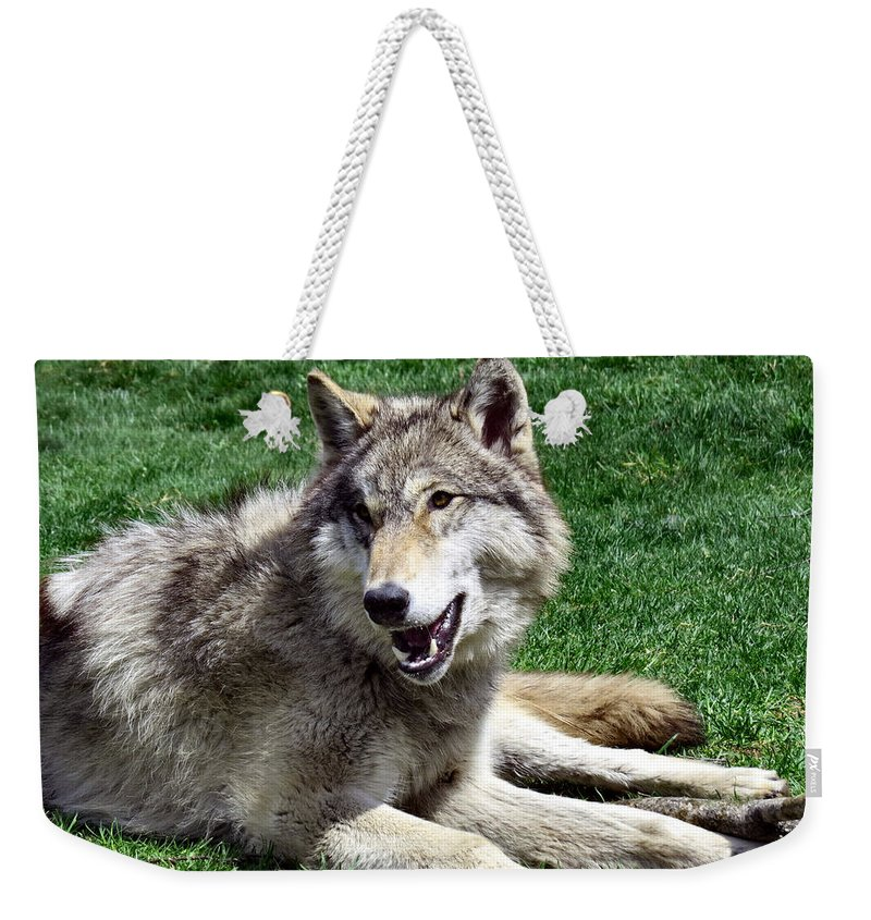 Wolf Weekender Tote Bag featuring the photograph Timber Sunning by Art Dingo