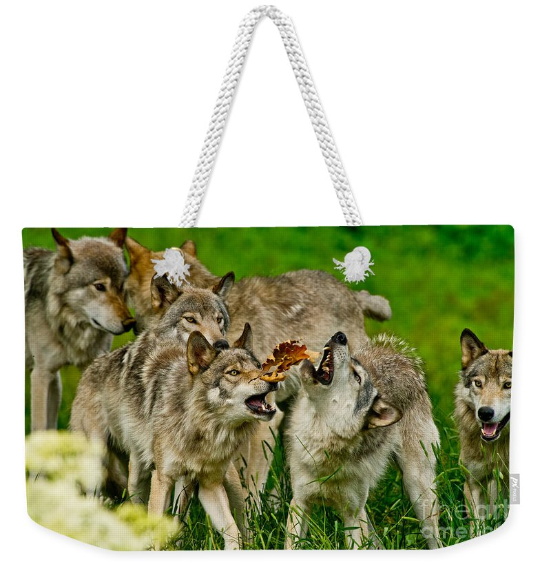 Timber Wolf Weekender Tote Bag featuring the photograph Timber Wolf Pictures 1593 by World Wildlife Photography