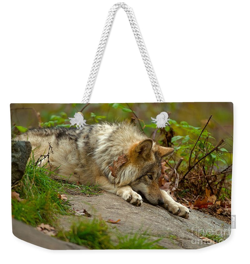 Timber Wolf Weekender Tote Bag featuring the photograph Timber Wolf Pictures 1646 by World Wildlife Photography