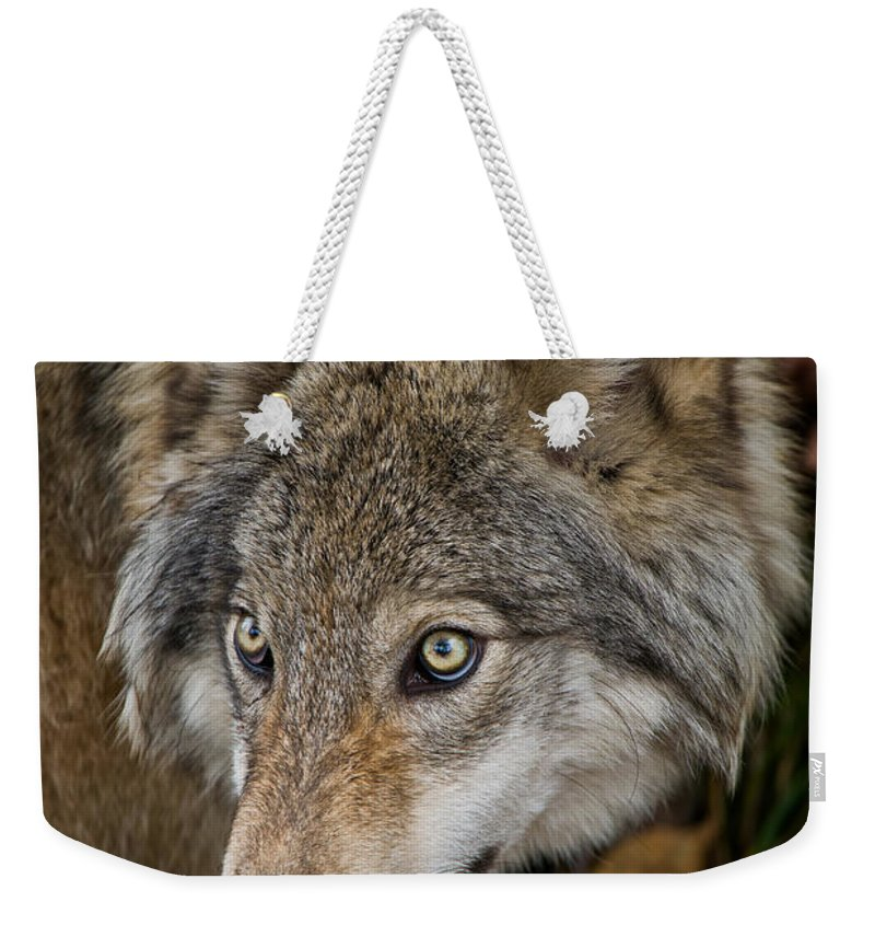 Timber Wolf Weekender Tote Bag featuring the photograph Timber Wolf Pictures 1660 by World Wildlife Photography