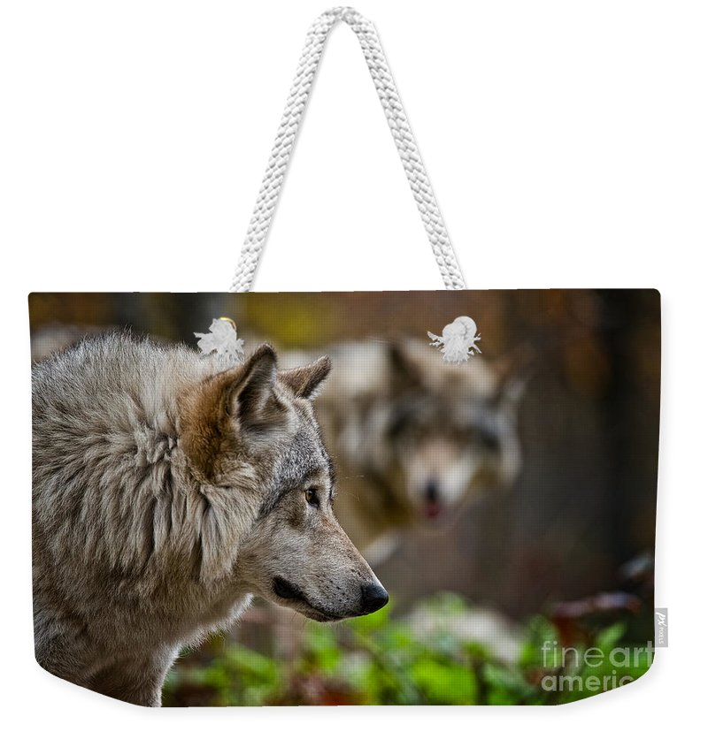 Timber Wolf Weekender Tote Bag featuring the photograph Timber Wolf Pictures 1693 by World Wildlife Photography