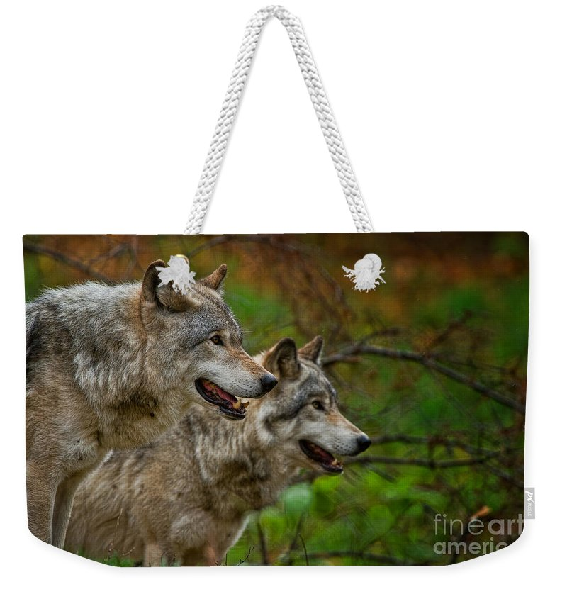 Timber Wolf Weekender Tote Bag featuring the photograph Timber Wolf Pictures 1710 by World Wildlife Photography
