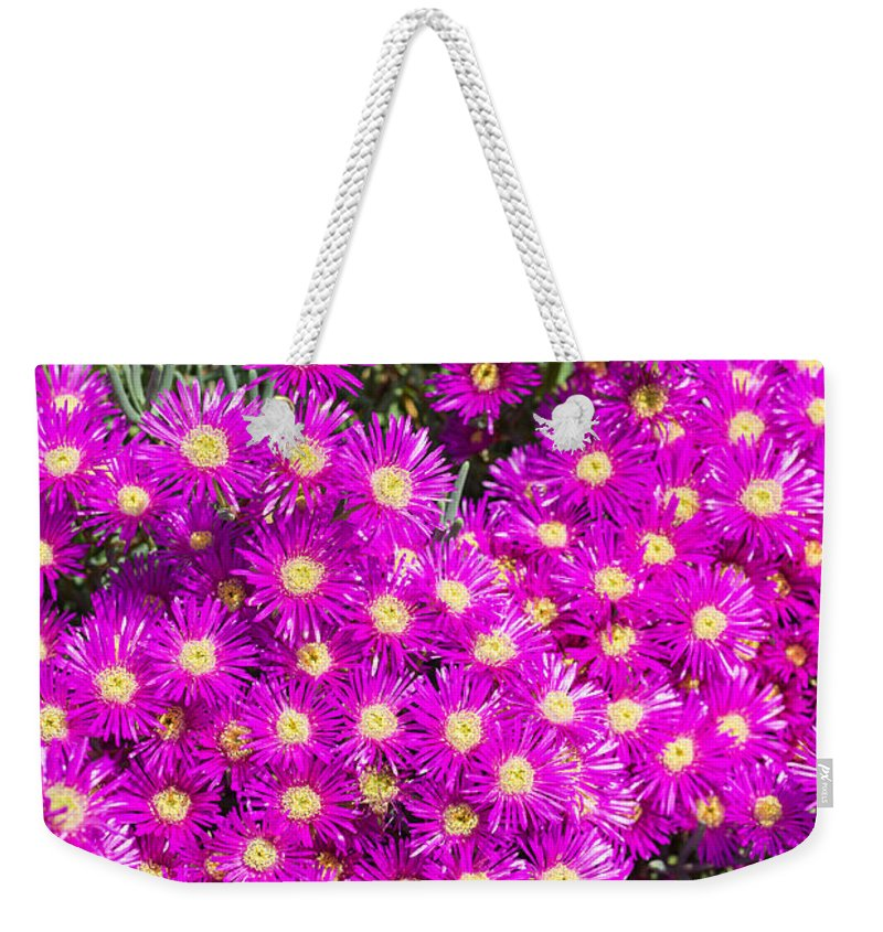 Midday Flowers Weekender Tote Bag featuring the photograph Tiny Dancer - Colorful Midday Flowers Lampranthus Amoenus Flower In Bloom In Spring. by Jamie Pham