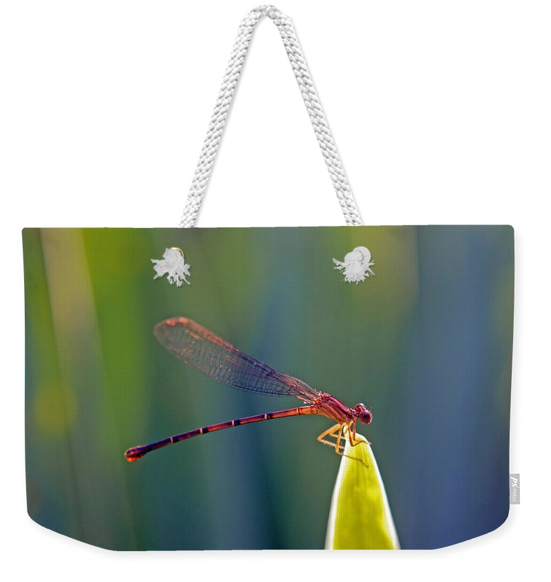 Animal Weekender Tote Bag featuring the photograph Tip Of The Grass by Kay Lovingood