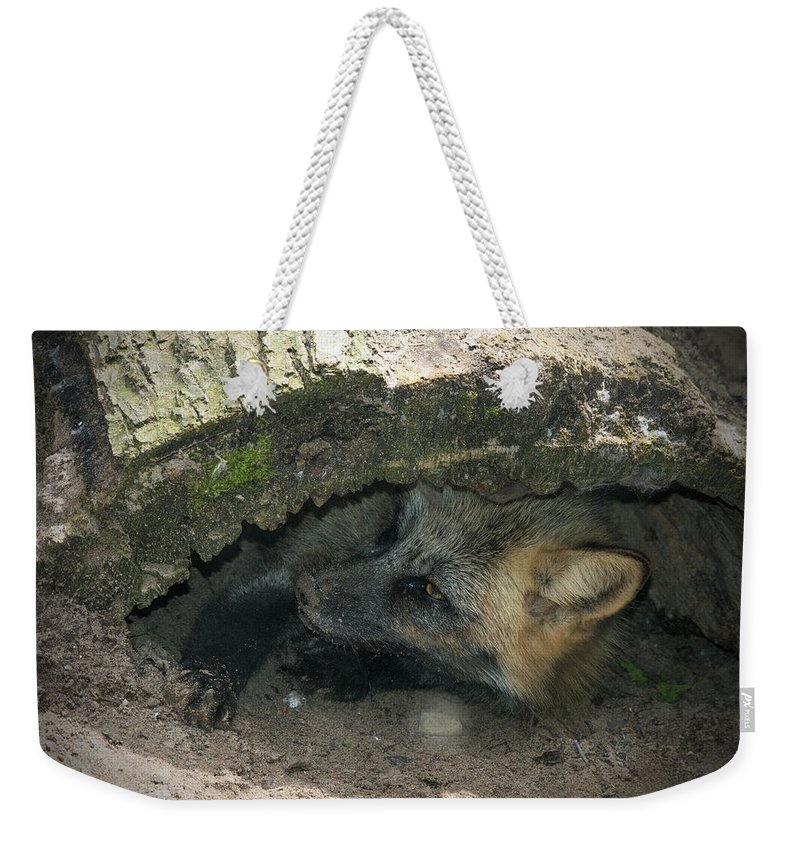Fox Weekender Tote Bag featuring the photograph Tired Fox by Jayne Gohr