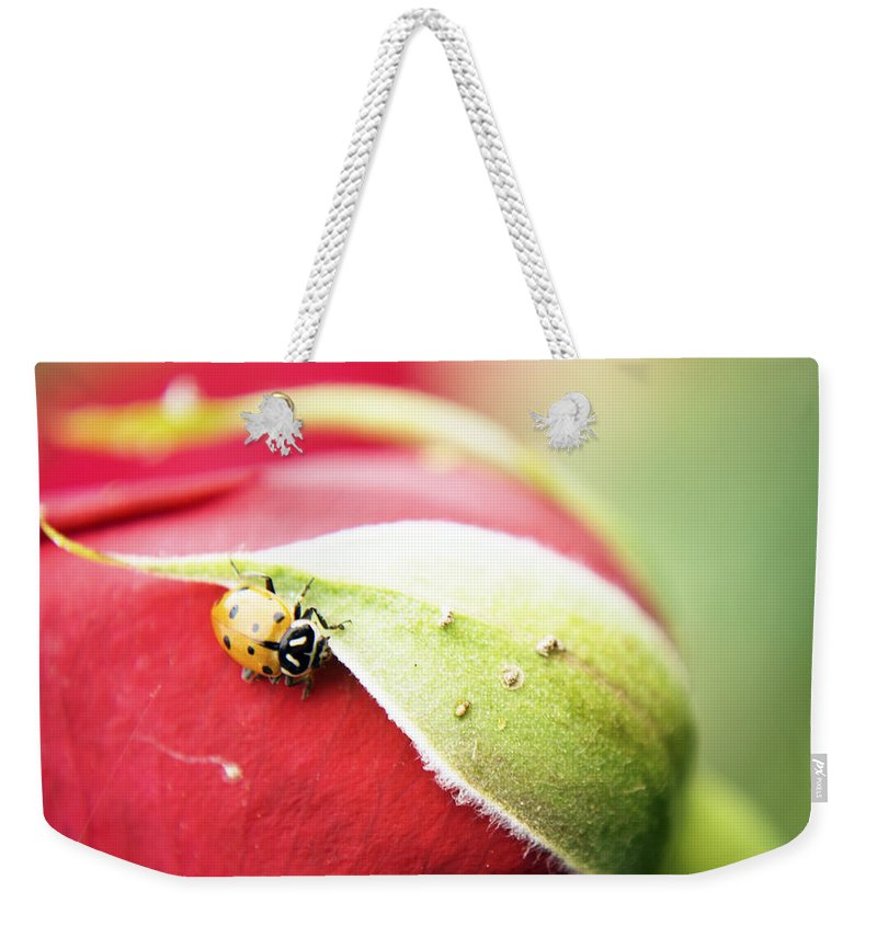 Rose Weekender Tote Bag featuring the photograph To Live Upon Such Colored Satin by Anna Burdette
