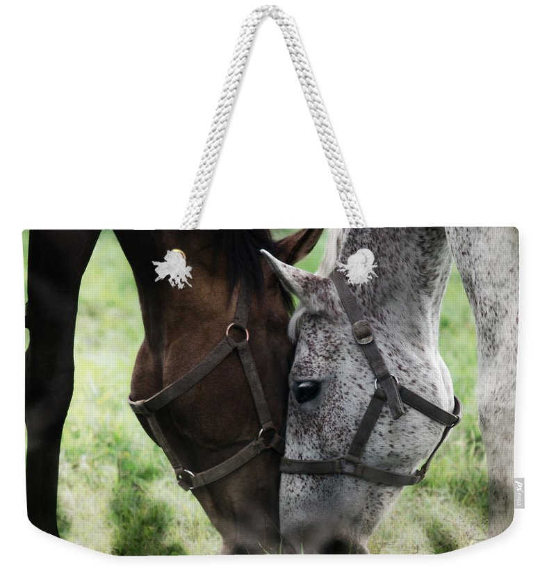 Horses Weekender Tote Bag featuring the photograph Together by Angel Tarantella