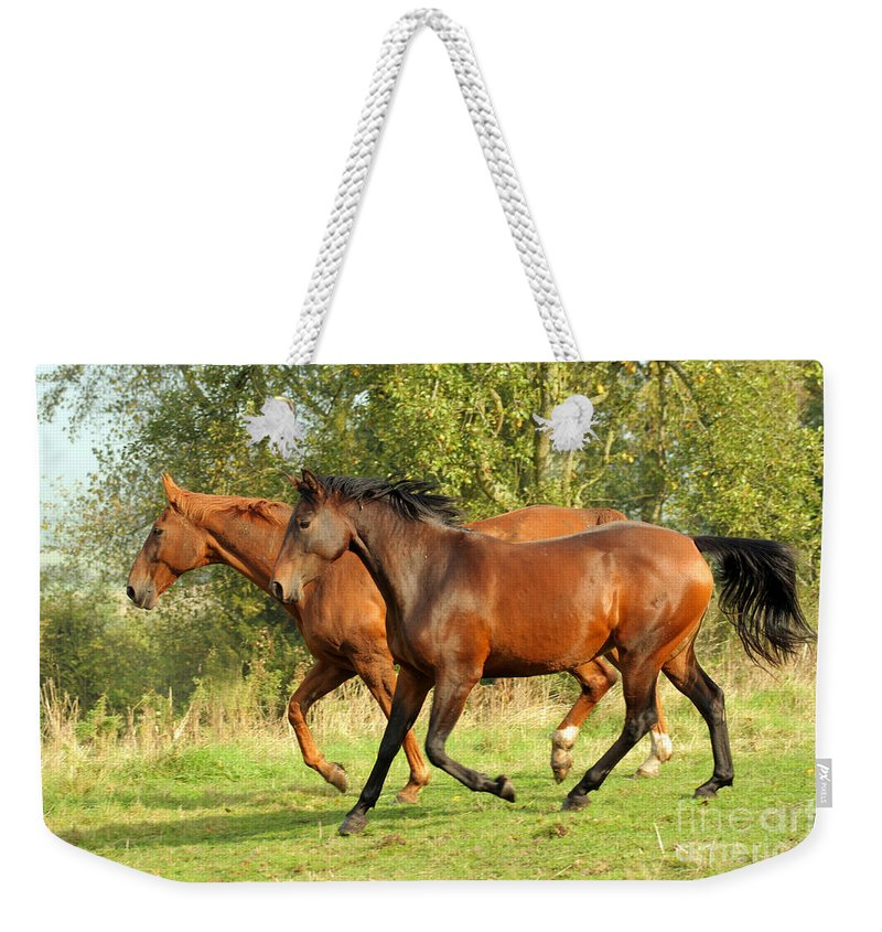 Horse Weekender Tote Bag featuring the photograph Together Now by Angel Ciesniarska