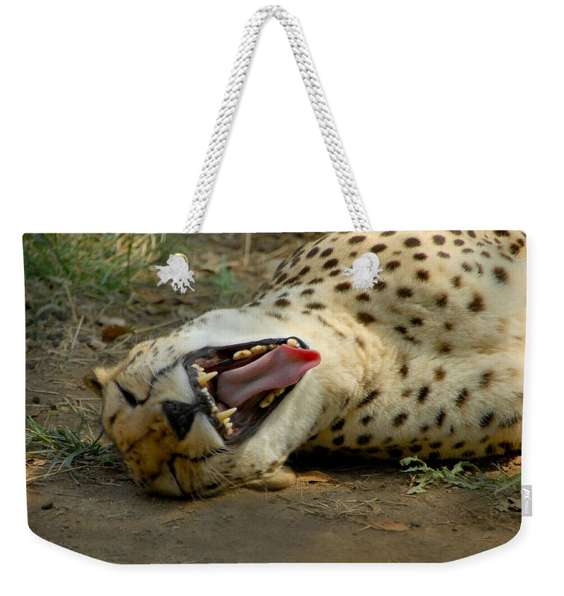 Cat Weekender Tote Bag featuring the photograph Too Funny by Donna Blackhall
