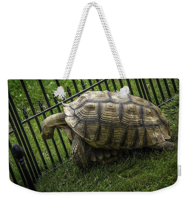 Tortoise Weekender Tote Bag featuring the photograph Tortoise Turtle Time by LeeAnn McLaneGoetz McLaneGoetzStudioLLCcom