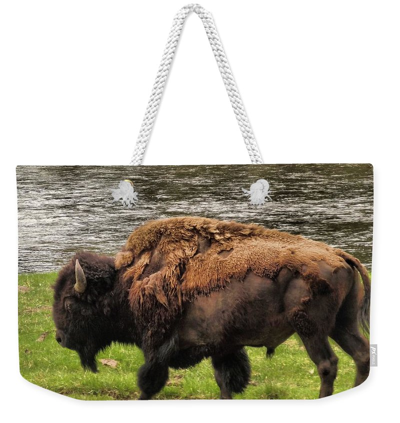 Bison Weekender Tote Bag featuring the photograph Tough by Dan Sproul