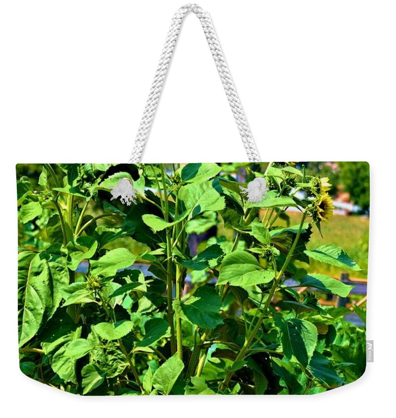 Sunflowers Weekender Tote Bag featuring the photograph Towering Sunflowers by Tara Potts
