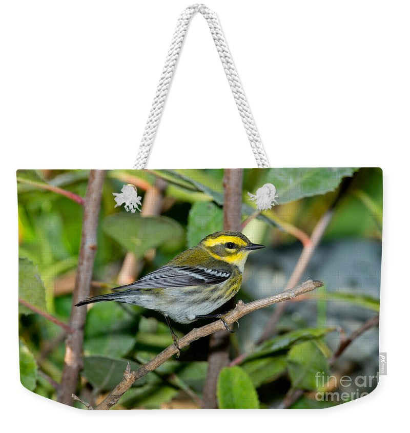 Townsend's Warbler Weekender Tote Bag featuring the photograph Townsends Warbler In Tree by Anthony Mercieca