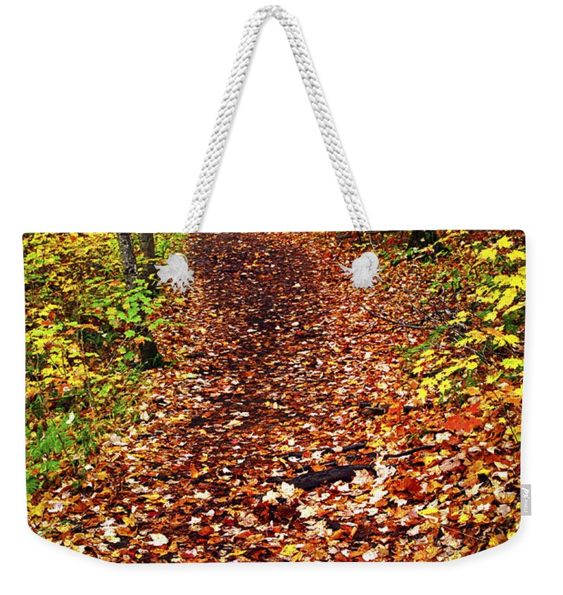 Autumn Weekender Tote Bag featuring the photograph Trail In Fall Forest by Elena Elisseeva