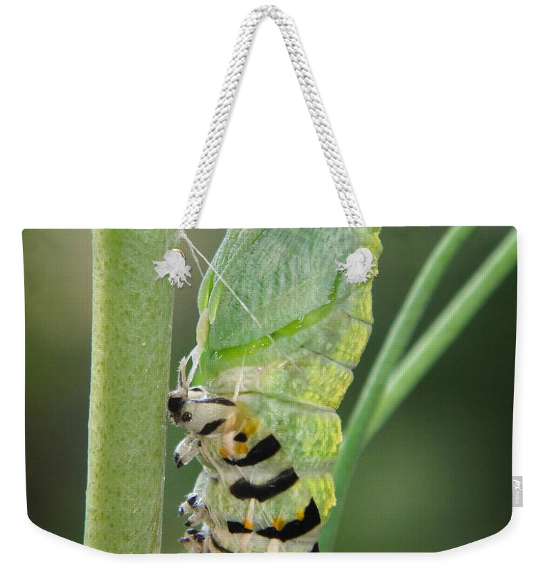 Caterpillar Weekender Tote Bag featuring the photograph Transformation by David and Carol Kelly