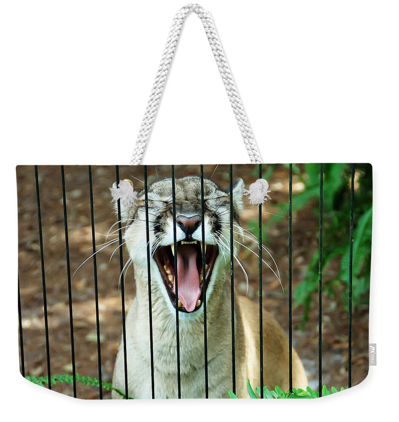 Panther Weekender Tote Bag featuring the photograph Trapped In A Cage by Aimee L Maher ALM GALLERY