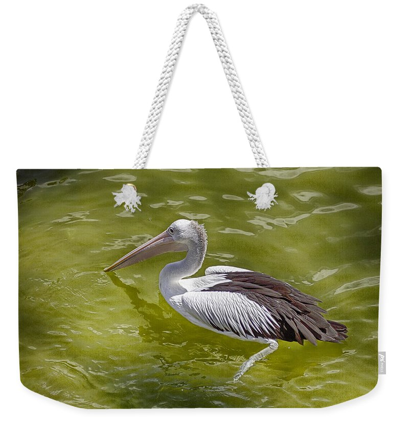 Pelican Weekender Tote Bag featuring the photograph Treading Water by Douglas Barnard