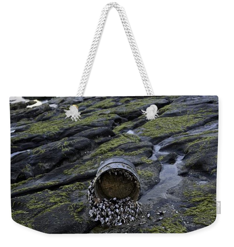Yachats Weekender Tote Bag featuring the photograph Treasures From The Ocean by Image Takers Photography LLC - Carol Haddon