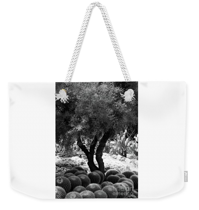 #tree # Cactus Weekender Tote Bag featuring the photograph Tree And Cactus by Kathleen Struckle