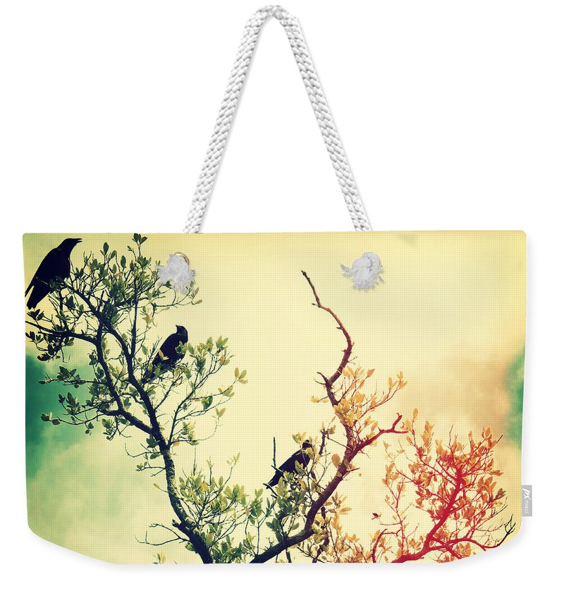 Florida Weekender Tote Bag featuring the photograph Tree Of Crows II Lights by Chris Andruskiewicz