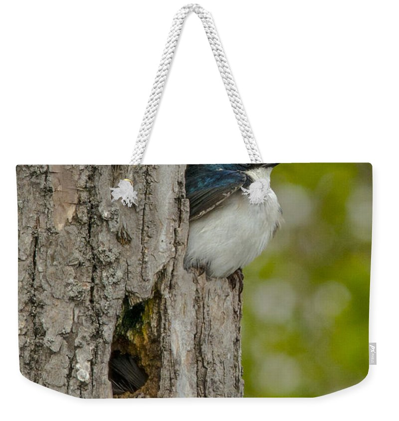 Tree Weekender Tote Bag featuring the photograph Tree Swallow by Jayne Gohr