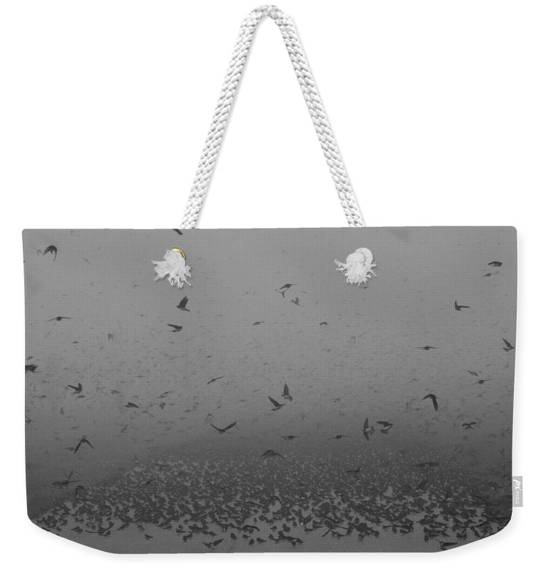 Birds Weekender Tote Bag featuring the photograph Tree Swallowpalooza 2 by Sandy Swanson
