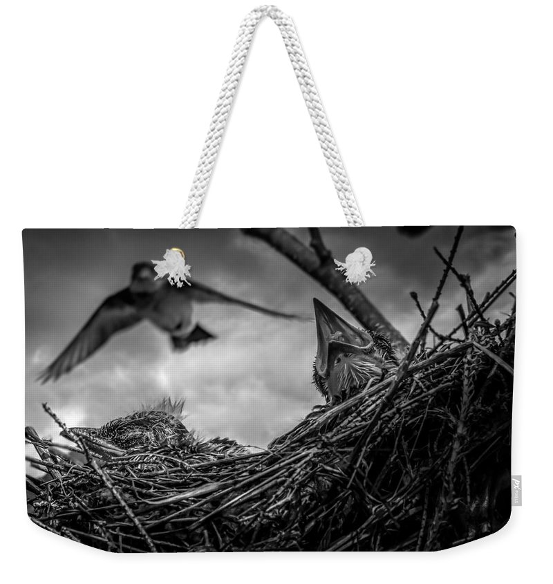 Swallow Weekender Tote Bag featuring the photograph Tree Swallows In Nest by Bob Orsillo