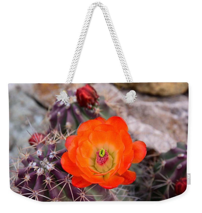 Trichocereusm Weekender Tote Bag featuring the photograph Trichocereus Cactus Flower by Michael Moriarty