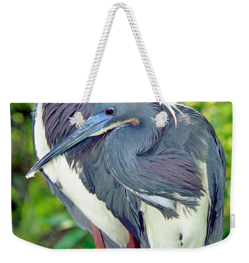 Animal Weekender Tote Bag featuring the photograph Tricolor Heron Adults In Breeding by Millard H. Sharp