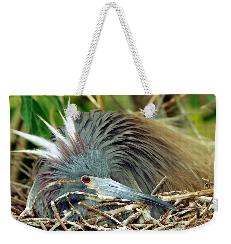 Animal Weekender Tote Bag featuring the photograph Tricolored Heron Incubating Eggs by Millard H. Sharp
