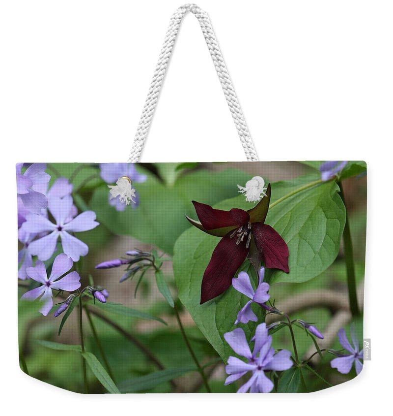 Trillium And Phlox (trillium Vaseyi & Phlox Divaricata) Weekender Tote Bag featuring the photograph Trillium And Phlox by Daniel Reed