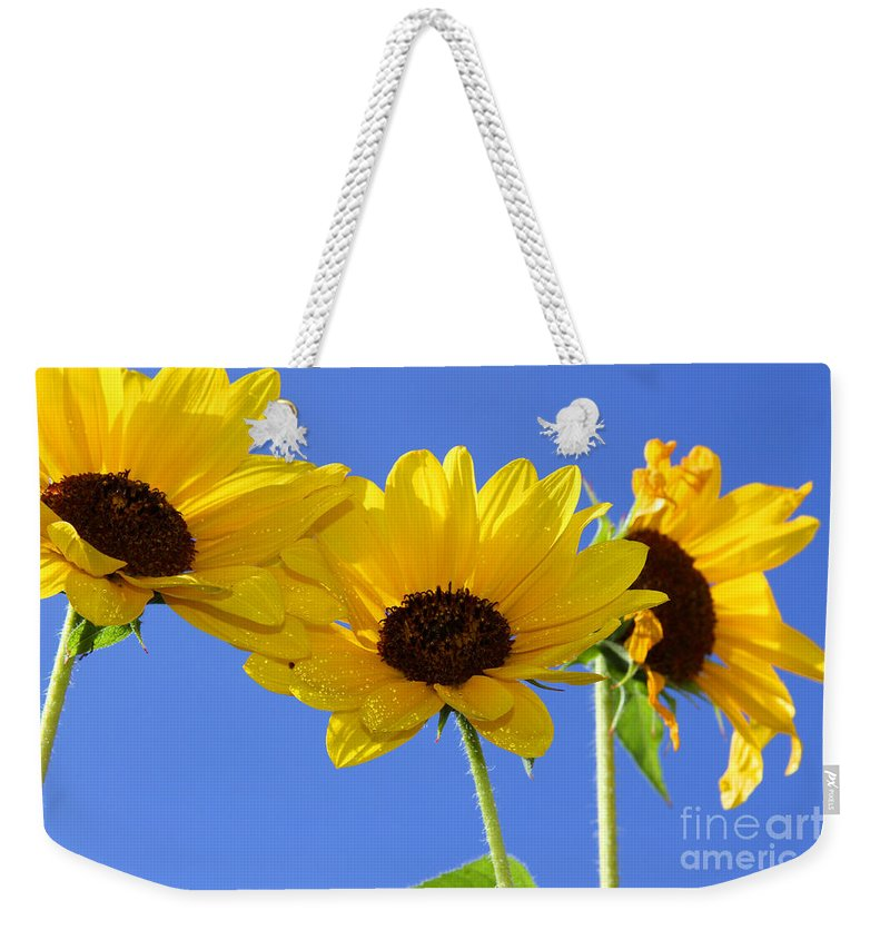 Daisy Weekender Tote Bag featuring the photograph Trio In The Sun - Yellow Daisies By Diana Sainz by Diana Raquel Sainz